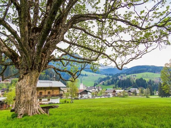 Kraftplatzwanderungen Filzmoos - Naturhotel Hammerhof, SalzburgerLand - kraftplatz ahornbaum bögrainhof