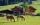biohotel hammerhof, biohotel hammerhof filzmoos, biohotel hammerhof salzburger land, biohotel hammerhof bischofsmütze, biohotel hammerhof österreich_hammerhof-hotel mit pferdekoppel